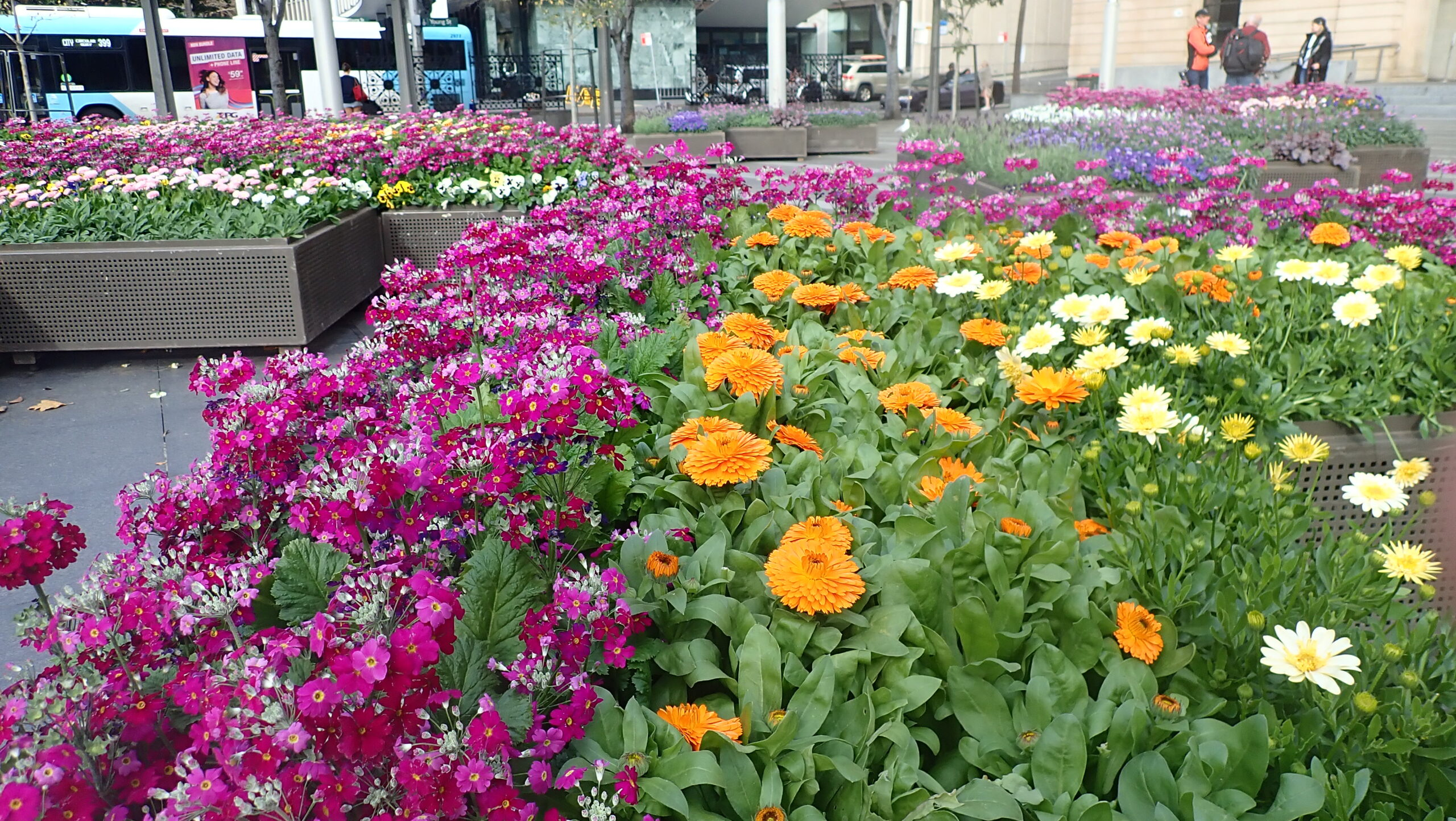 City of Sydney's 'Living Colour' streetscapes